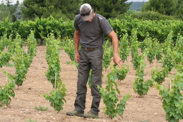 FROM VINE TO GLASS 02 - VIGNOBLE